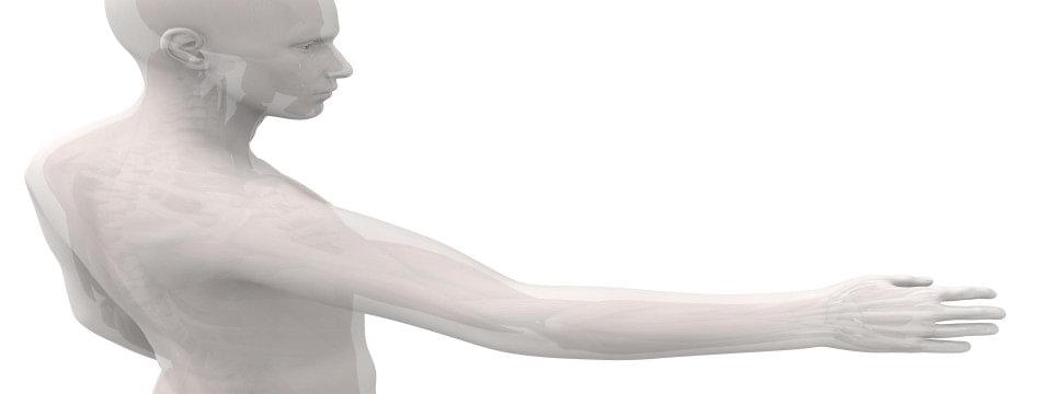 Плечо/рука/кисть | Ottobock Export