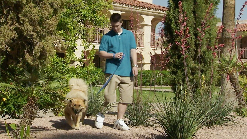 Chandler taking a dog for a walk.
